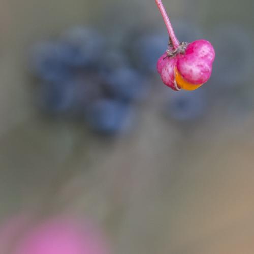 Rêve de fusain