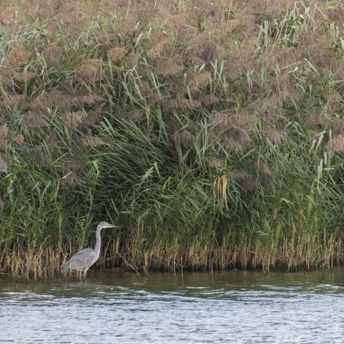 Dans la réserve de Poses, dans l'Eure