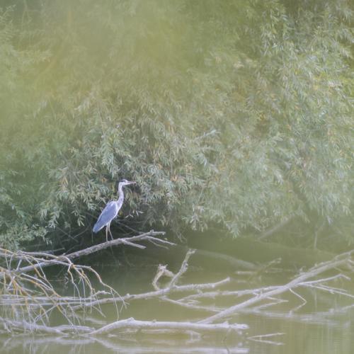 Sur un étang eurois
