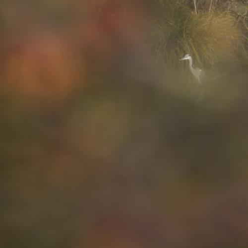 L'automne en bord de Loire, dans l'Eure