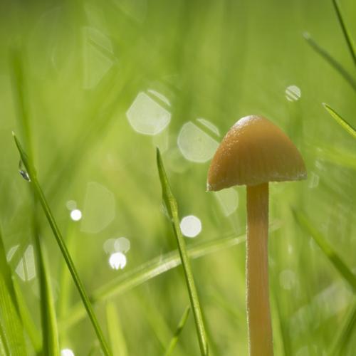 March mushroom